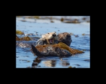 SEA OTTER WATERS
