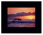 Great Whale Sunset (Large)