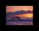 GREAT WHALE SUNSET