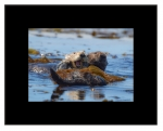 Sea Otter Waters (Extra Large)