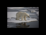 Polar Reflection