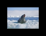 Leopard Seal Home